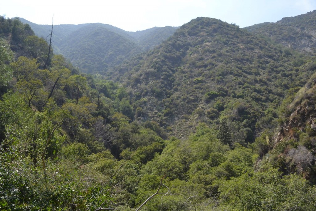 The San Gabriel Mountains and Fish Canyon trail provide a lush green landscape to explore in Los Angeles county.